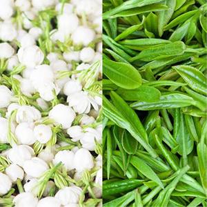 jasmine green tea loose leaf