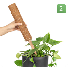 Insert the wood stake into the soil close to the plant's stem.