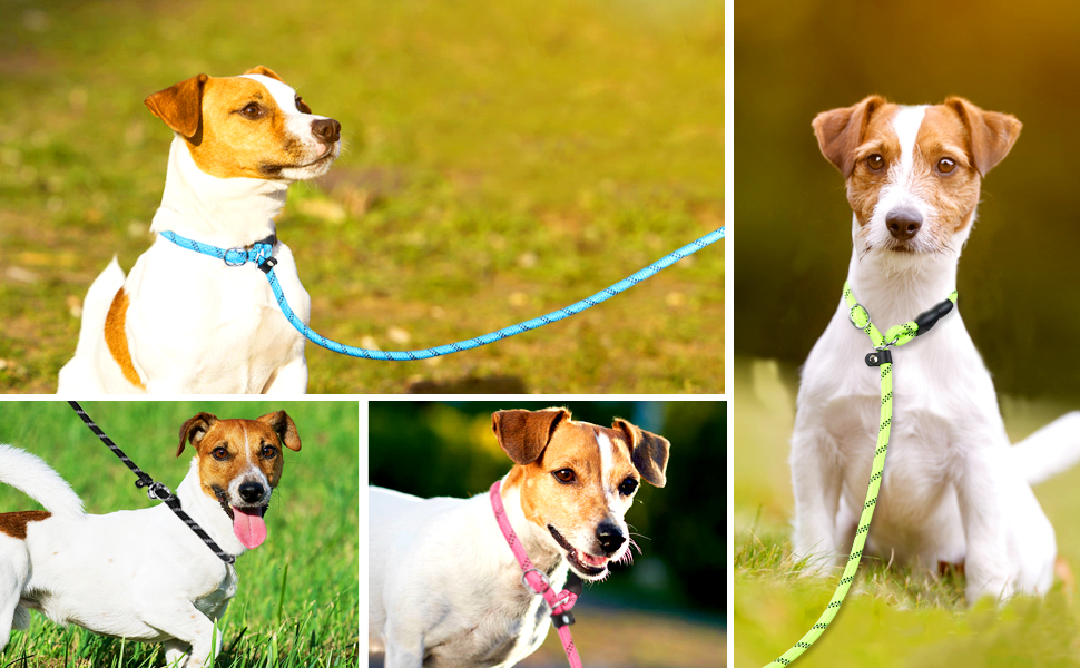 dog leashes for small dogs