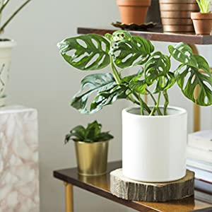 houseplant resource center, plant lovers, nutrients, plant experts, houseplant leaf armor