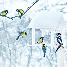 Birds feeding from a snow-covered platform bird feeder during the winter time.