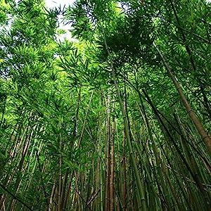 natural material bamboo sheets