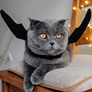 cat halloween costumes puppy bat costume dog for large dogs pet bell wings cats kitten black