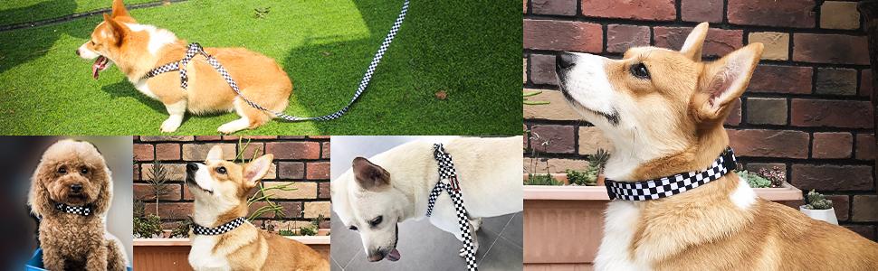 harness collar leash set