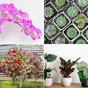 indoor plants bam-fx