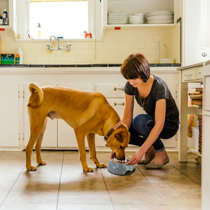 Pet Dog Bowls 2 Stainless Steel Dog Bowl with No Spill Non-Skid Silicone Mat + Pet Food Scoop Water
