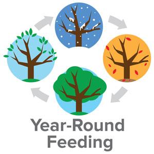year round feeding