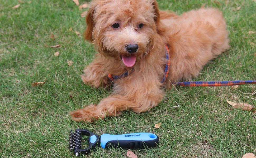 Maxpower Planet Dog Brush and Cat Brush small