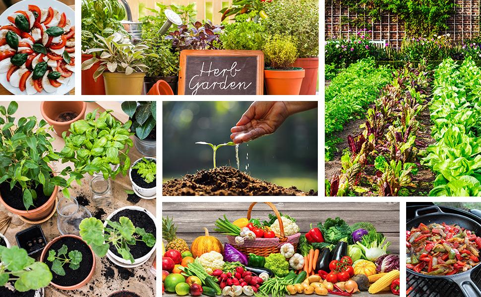 potted vegetables, vegetable garden, herb garden, sliced tomatoes, skillet with chopped vegetables