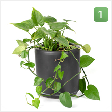 An unhappy plant :(
