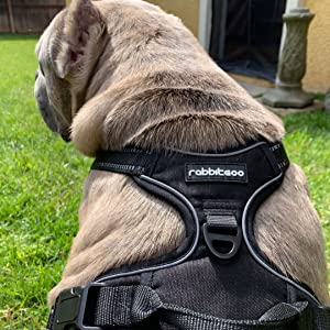 rabbitgoo large dog harness medium xl dog harness best for large breeds pink girl dog harnesses cute