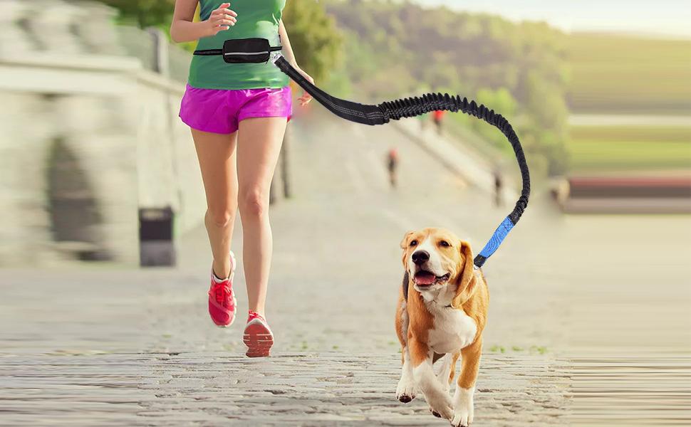 Wandern Walking Sansund einziehbare Hundeleine mit Zwei Spanngurten f/ür Laufen