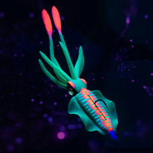 UV and Glow Features