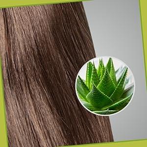 Multi-dimensional Benefits of Aloe Vera
