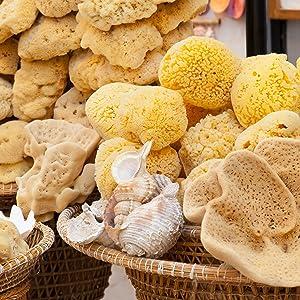 Sea Wool natural sponges