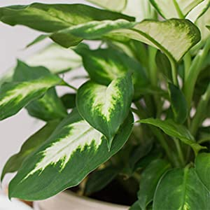 plants, plant leaves, clean plant leaves, clean and protect plant leaves, houseplants, leaves