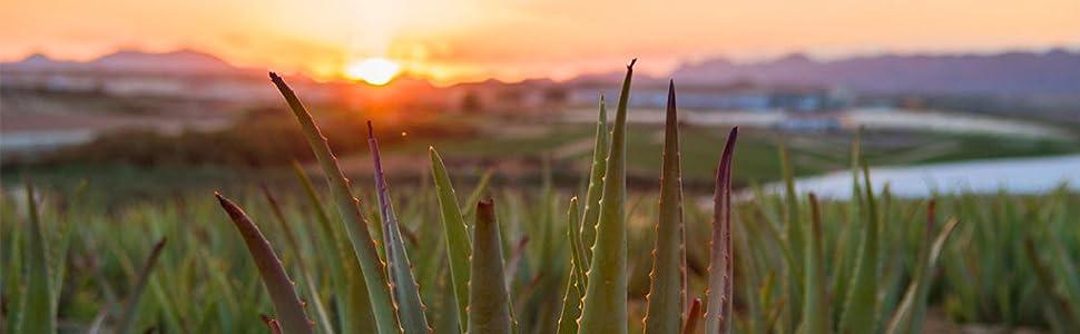 Aloe Vera Green Frog Spagna Bio