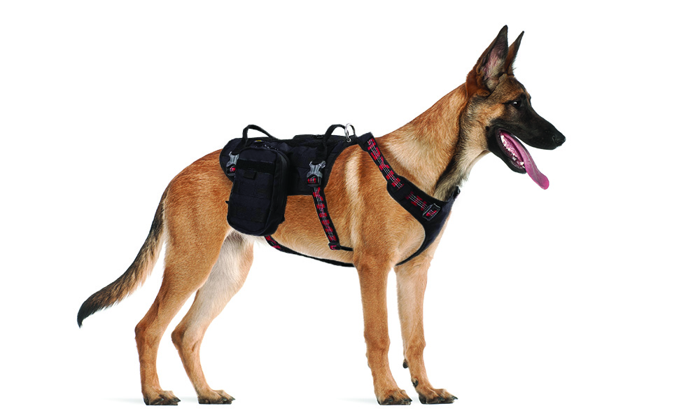 black backpack harness