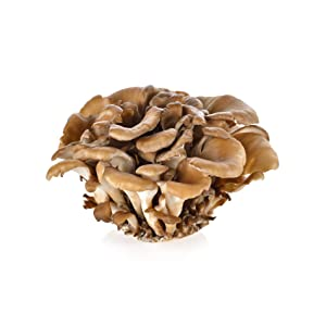 beta glucans medicinal mushrooms ganoderma lucidum mushroom extract chaga mushrooms shitake mushroom