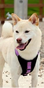 padded harness, dog accesories, pet training, dog harness, reflective dog harness