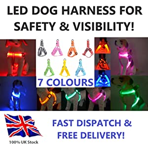 harness led