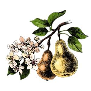 fresh, feminine, floral,  fruity, perfume for women