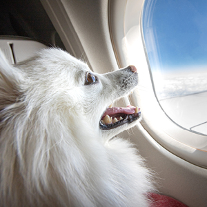 airline approved travel dog cat