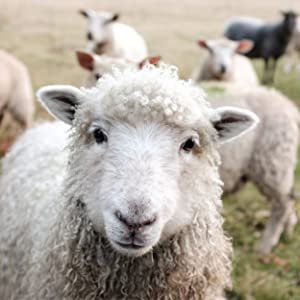 Why Wool?