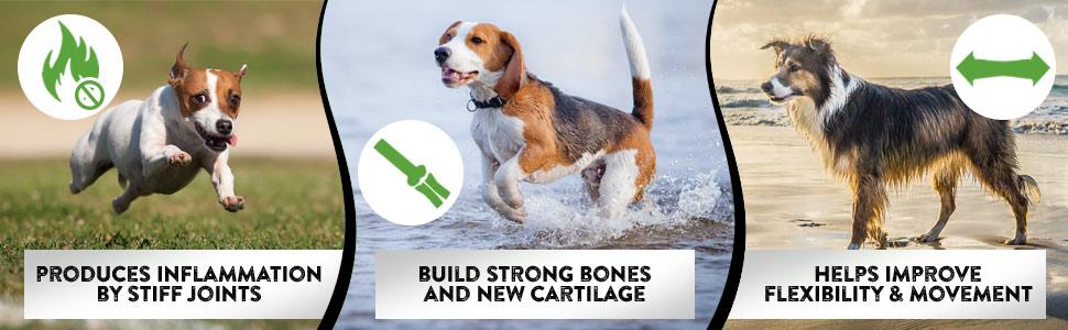 glucosamine chondroitin omega dog supplies msm immune turmetic extend health supplement kalaka