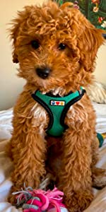 classic dog harness, dog accesories, pet training, dog harness, reflective dog harness, mesh harness