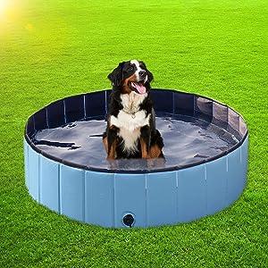 cat swimming house