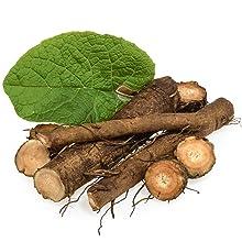 Burdock Root Oil