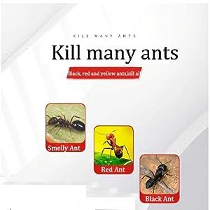 kills all ant