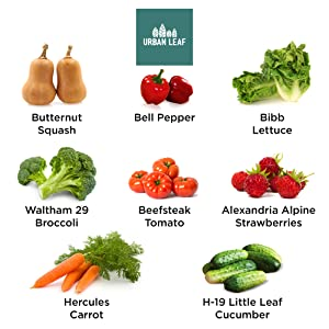 Vegetable Seed Collection Seed Variety Options