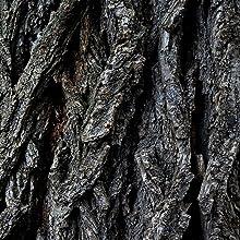 tree bark lumber wood