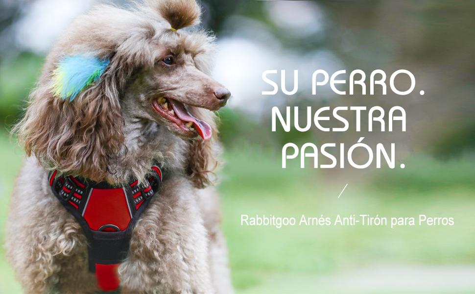 rabbitgoo Arnés Pecho Grande Perro Arnés Rojo para Perro Grande ...