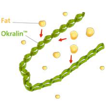 Okra fat 1