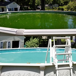 Pool Treatment Green to Clean