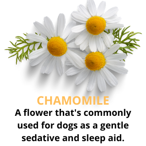 separation anxiety chamomile thunder calming aid for dogs