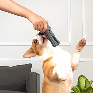 Dog Playing Toys