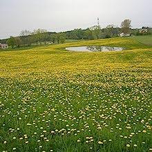 Poland no GMO free organic gluten free dandelion farm tea drink herbal acid free