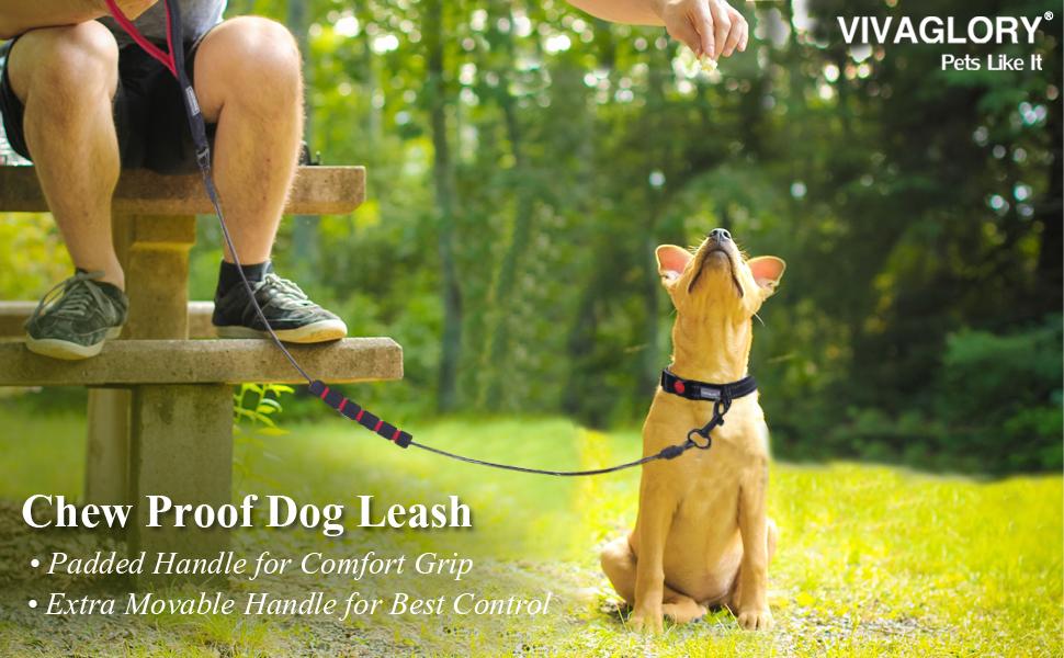 chew proof dog leash