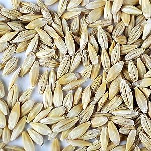 barley Seeds - 1 Lb - Non-GMO, Heirloo