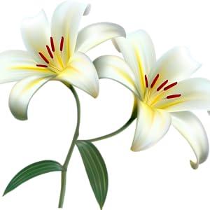 white lily gel cream