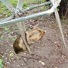 mole traps that work 3