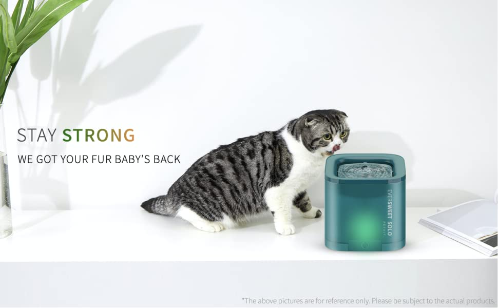 cat water founain dispenser