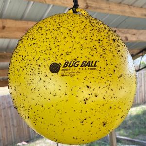 Bug Ball. Gnat ball