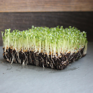 High Germination Rate