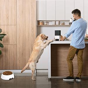 Double Dog Cat Bowls Pet Automatic Water Dispenser Detachable Dog Glass Feeder Bowl No-Spill Pet
