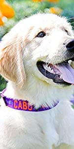 Personalized Paw amp; Bone Embroidered Dog Collar - Custom, Adjustable, Odor, Safe, Contrast Stitching